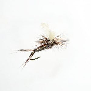 Splitwing Adams PA